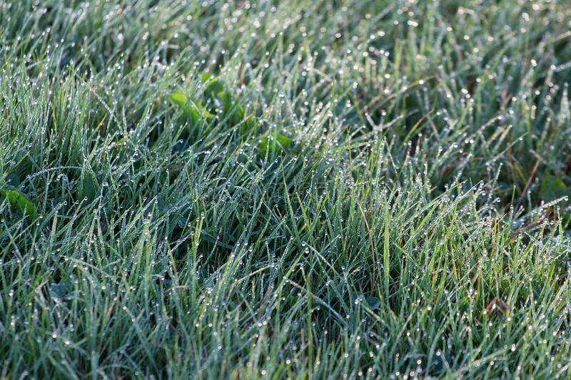 Shallow Focus Photography of Grass Wit Droplets of Water royalty free stock image