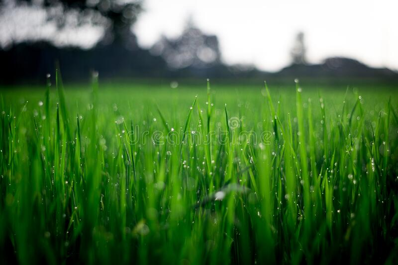 Shallow Focus Photography Of Green Grasses During Daytime Free Public Domain Cc0 Image