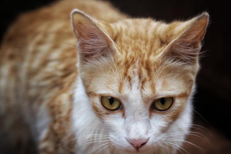 Shallow Focus Photography of Orange Tabby Cat stock photo