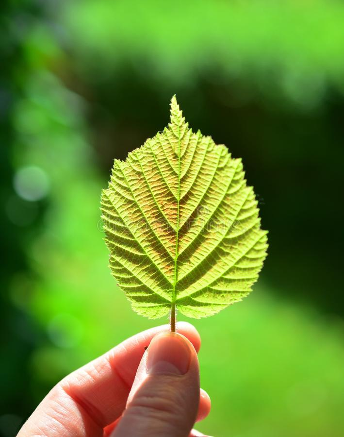 Shallow Focus Photography Of Person Holding Green Leaf Free Public Domain Cc0 Image
