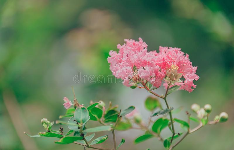 Shallow Focus Photography of Pink Petal Flowers stock image