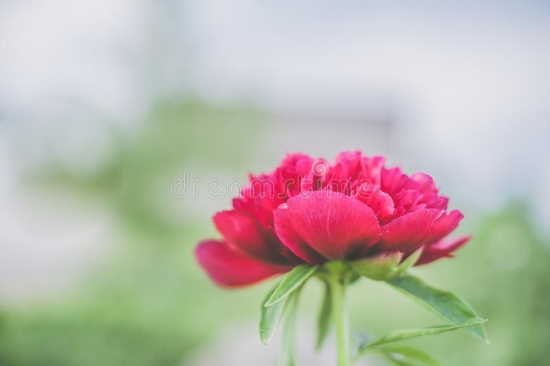 Shallow Focus Photography Red Petaled Flower Free Public Domain Cc0 Image