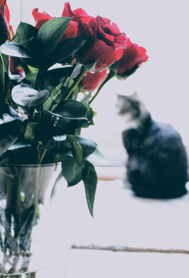 Shallow Focus Photography of Red Roses royalty free stock image