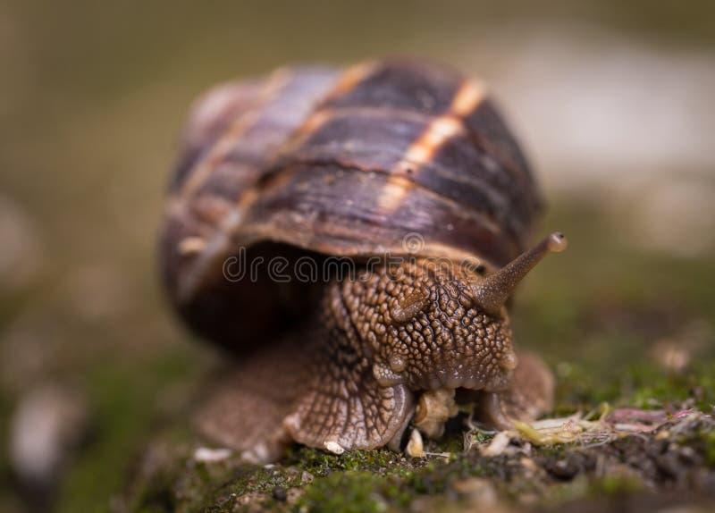 Shallow Focus Photography Of Snail royalty free stock photos