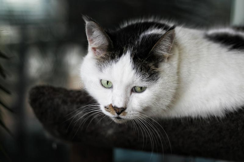 Shallow Focus Photography of White and Black Cat royalty free stock images