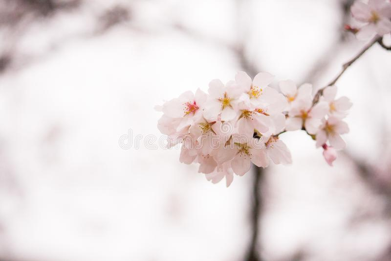 Shallow Focus Photography of White Flowers royalty free stock photography