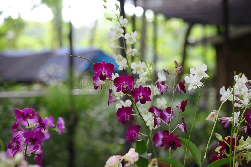 Shallow Focus Photography of White and Pink Flowers stock images