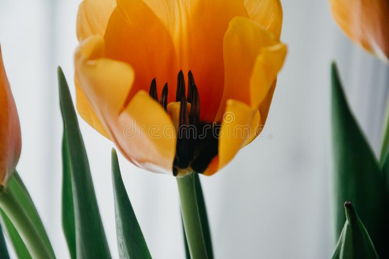 Shallow Focus Photography of Yellow Flower stock photos