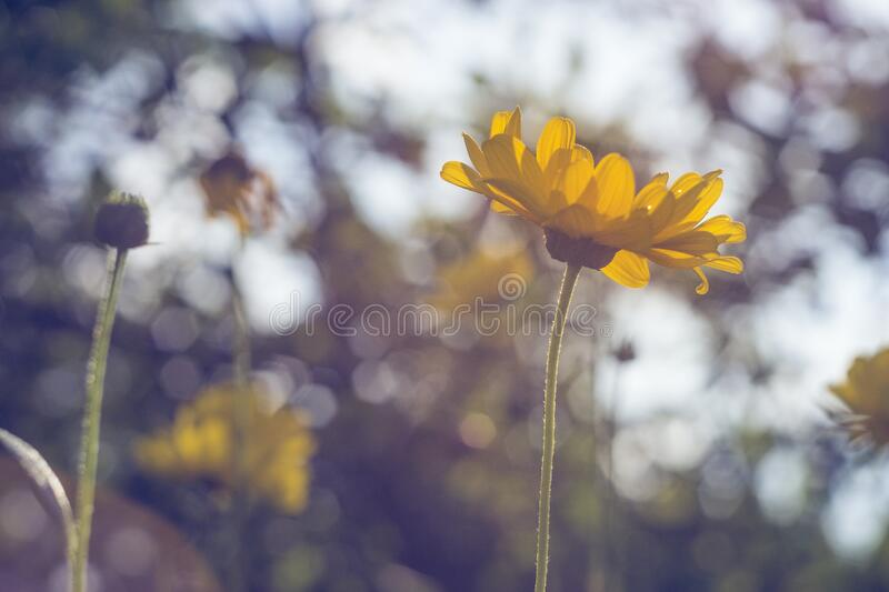 Shallow Focus Photography Of Yellow Sunflower Free Public Domain Cc0 Image
