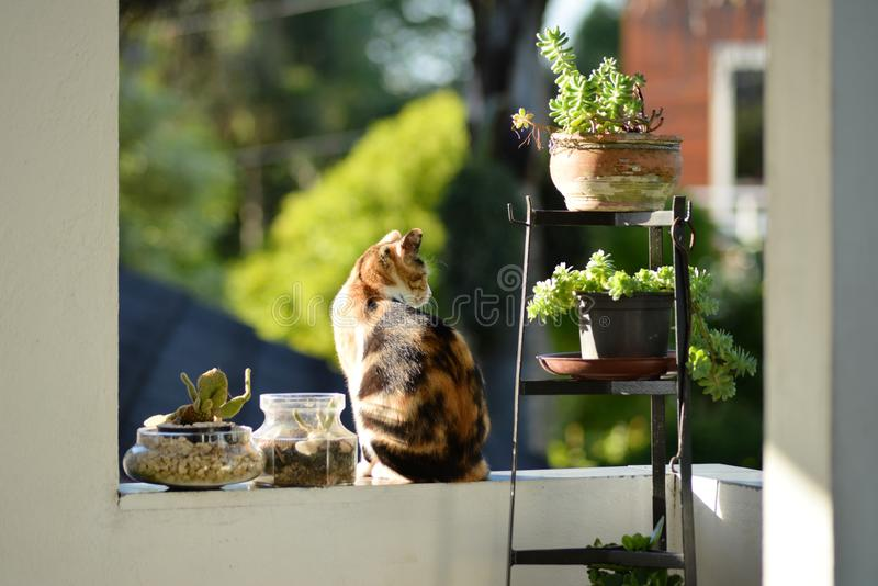 Shallow focus shot of a cute brown and black cat standing next to green plants stock photography