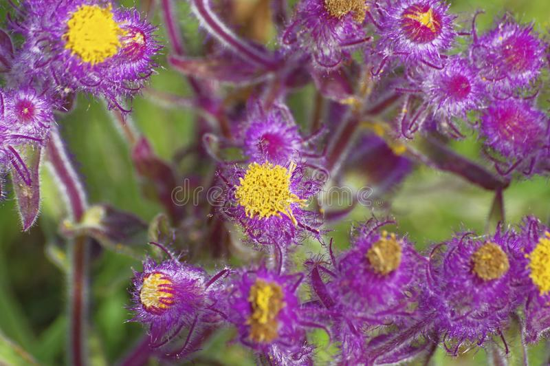 Shallow focus shot of purple flowers growing in a field royalty free stock image