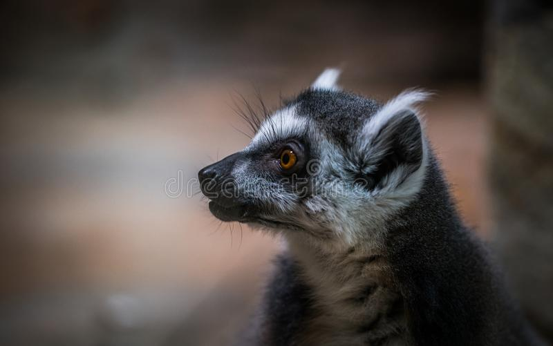 Shallow Focus of White and Black Animal stock photography