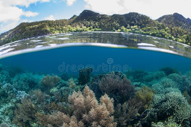 Beautiful Coral Reef and Islands in Raja Ampat. A shallow, healthy coral reef grows in Raja Ampat. This tropical region is known as the heart of the Coral royalty free stock photography