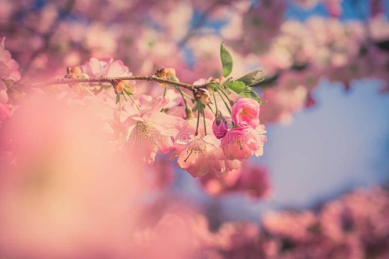 Shallow Photography of Pink Flower stock photography