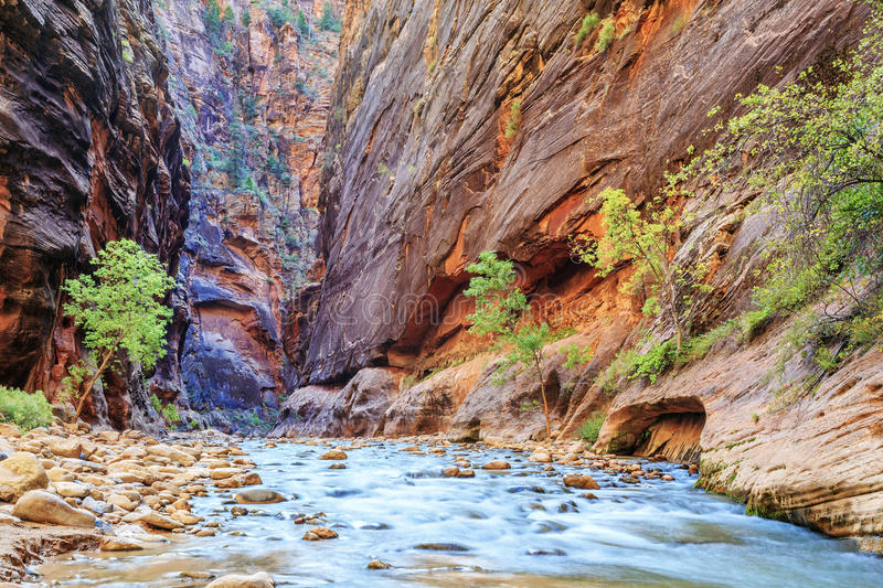 Shallow rapids of the famous Virgin River royalty free stock photo
