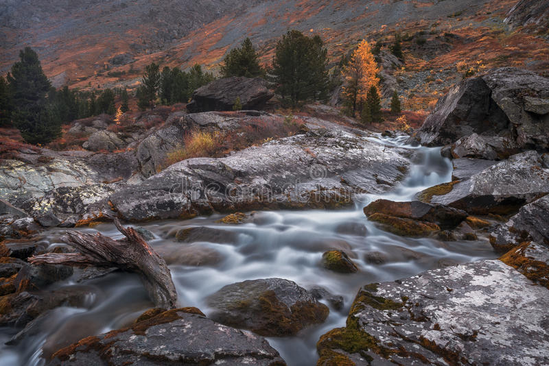 Shallow Rocky Stream Long Exposure View With Pine Trees, Altai Mountains Highland Nature Autumn Landscape Photo. Beautiful Russian Wilderness Scenery Image stock images