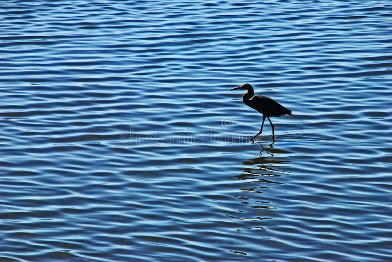 Shallow sea with an egret royalty free stock images
