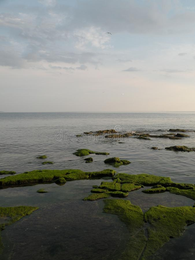 Shallow stones, round stones, mossed with moss, from a translucent water, light refuses from water, shallow sea,looks l. Ike teksture of map,clean water of the stock photos