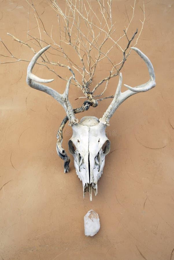 Shaman's Totems Deer Skull  royalty free stock image
