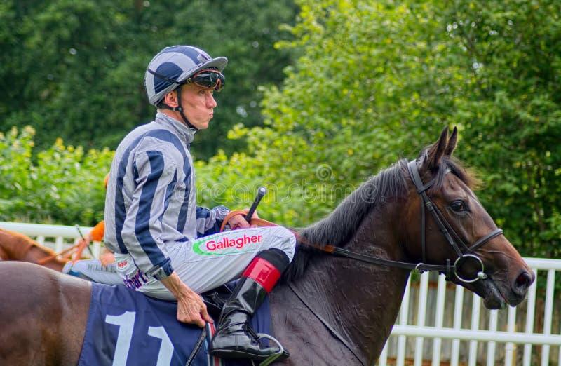 Shane Kelly Paardenrennenjockey op Wailea-Nachten stock afbeelding