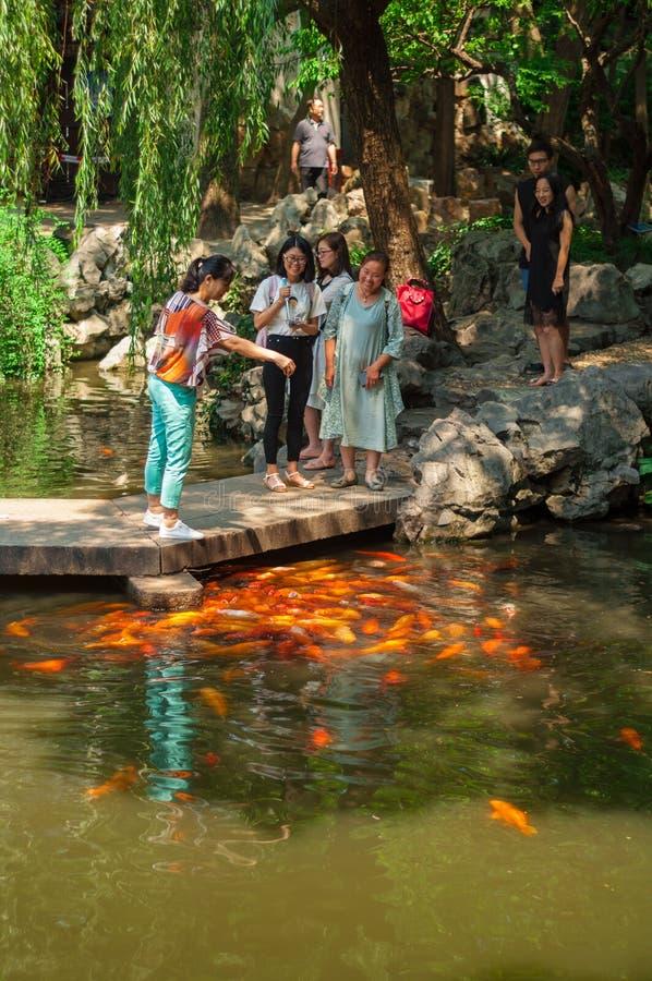 Shanghai, Cina - 17 giugno 2017: pesci d'alimentazione della carpa della gente sopra fotografia stock libera da diritti