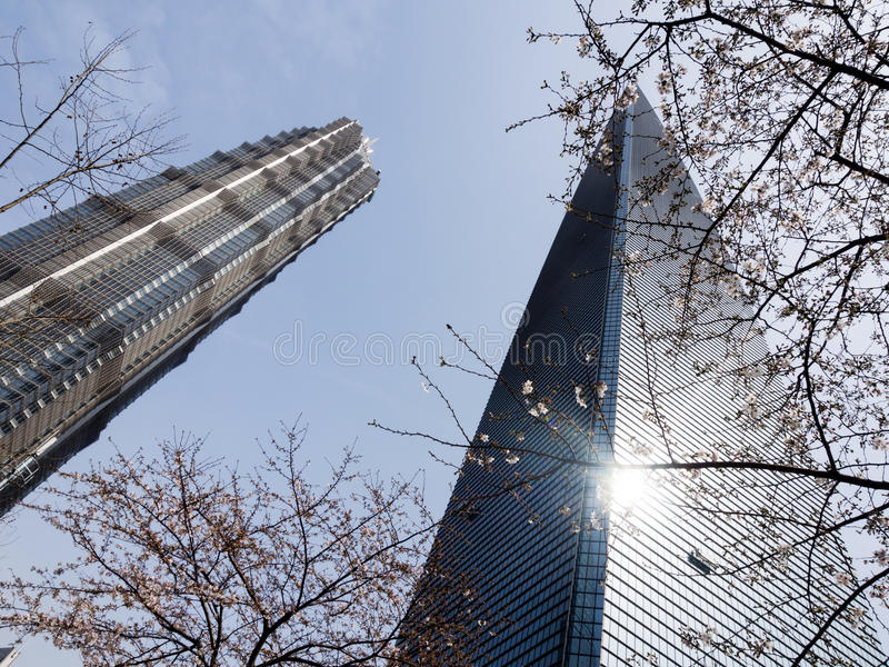 Shanghai Jin Mao tower and World Financial Center in spring with cherry blossoms. Shanghai, China - March 20, 2016: Shanghai Jin Mao tower and World Financial royalty free stock photography