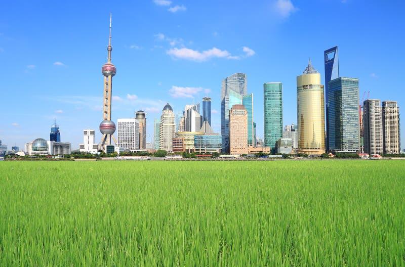 Shanghai Lujiazui city of field landscape. Lujiazui Finance&Trade Zone of Shanghai landmark skyline at field landscape royalty free stock image