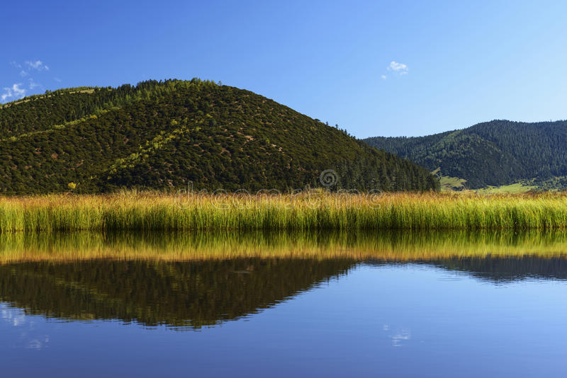 Shangri la meadow landscape. Shangri la wetland landscape with reflection and mountain background at pudacuo national park, china stock images
