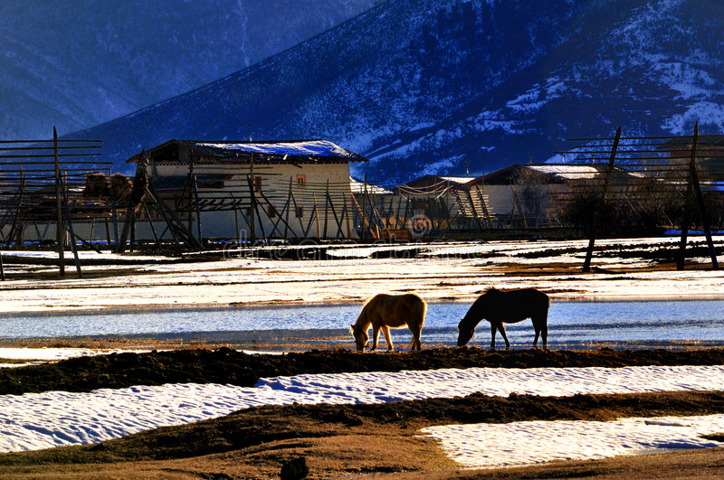 Shangri-La's winter. Shangri-La, the world's most beautiful places in the winter Tibetan residential areas, pasture, and go natural stock images