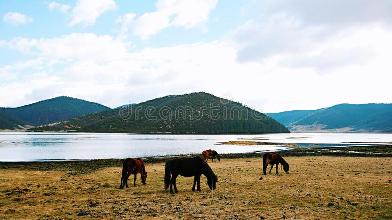 Shangri-La. The Tibetan language means & x22;the heart of the sun and the moon& x22;, is the city and the capital of the Diqing Tibetan Autonomous Prefecture royalty free stock photography