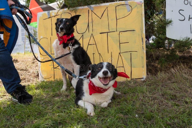 Shannon, Irlande, juin 5, 2019 : Même les chiens ont joint la protestation de visite d'atout d'anto chez Shannon Airport, Irlande photographie stock