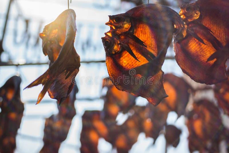 SHAOXING, CHINA: Droge vissen onder helder zonlicht stock afbeelding