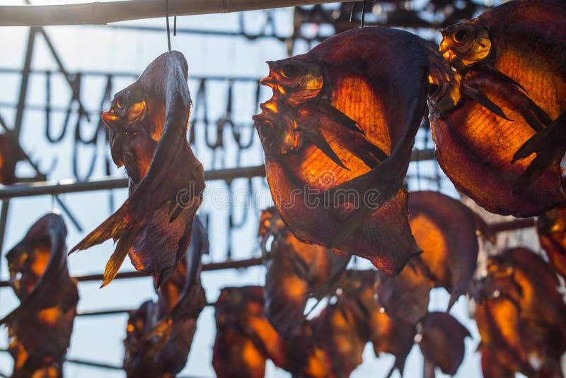 SHAOXING, CHINA: Peixes secados sob a luz solar brilhante fotografia de stock