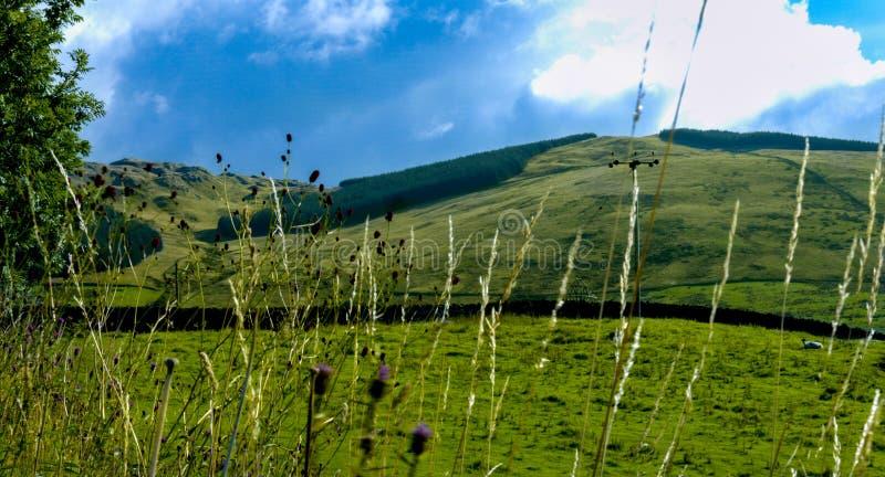 Shap Fells, Cumbria royalty-vrije stock foto