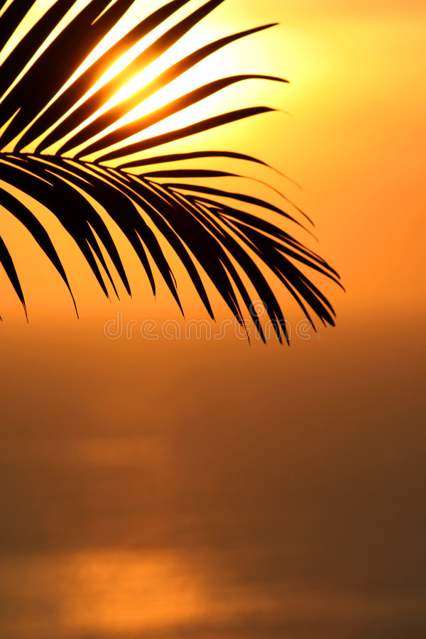 Shape of palms stock images