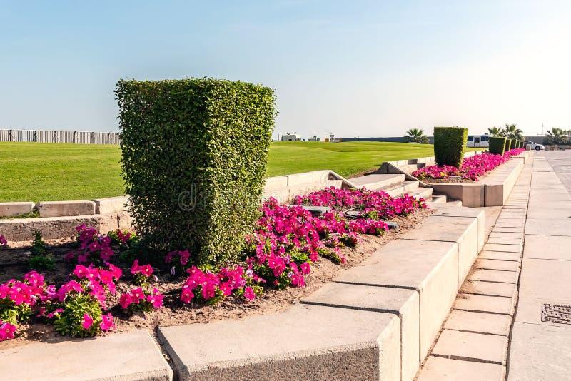 Shaped arregló el arbusto en el Doha, la capital de Qatar fotos de archivo