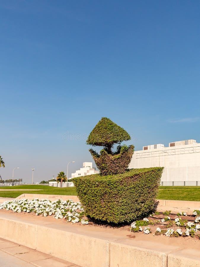 Shaped arregló el arbusto en el Doha, la capital de Qatar imágenes de archivo libres de regalías