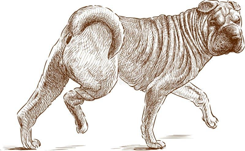 Shar-pei ilustración del vector