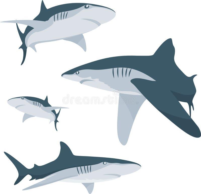 Download Shark stock vector. Image of caribbean, cannibal, displeased - 10277456
