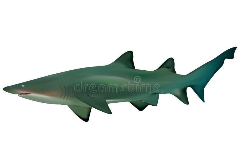 Download Shark stock vector. Image of blue, underwater, diving - 11125939