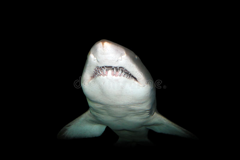 Download Shark stock photo. Image of jaws, animals, predator, reef - 14179314