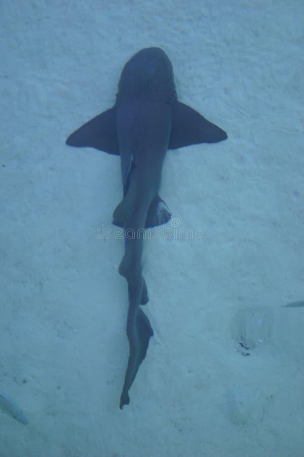 Free Shark Stock Photography - 200042