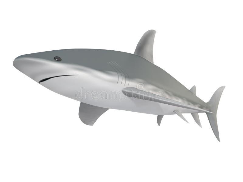 Download Shark stock illustration. Illustration of danger, isolated - 25593255