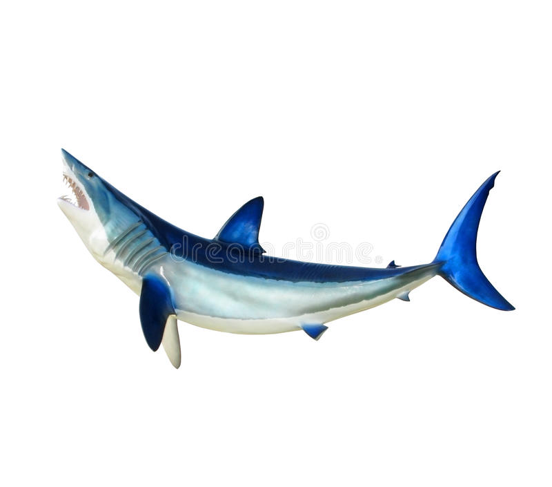 Shark. A large shark with mouth open isolated on a white background royalty free stock images