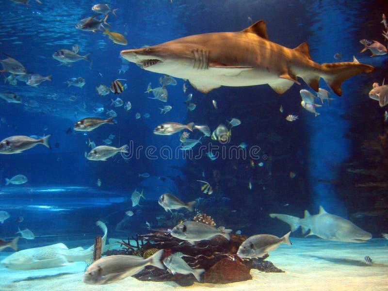 Shark in aquarium stock photo
