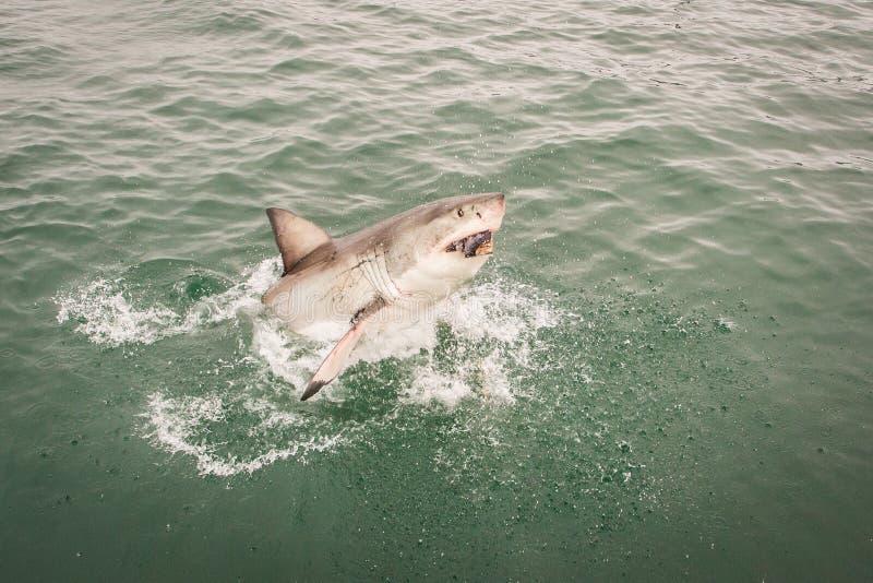 Shark attack royalty free stock photo