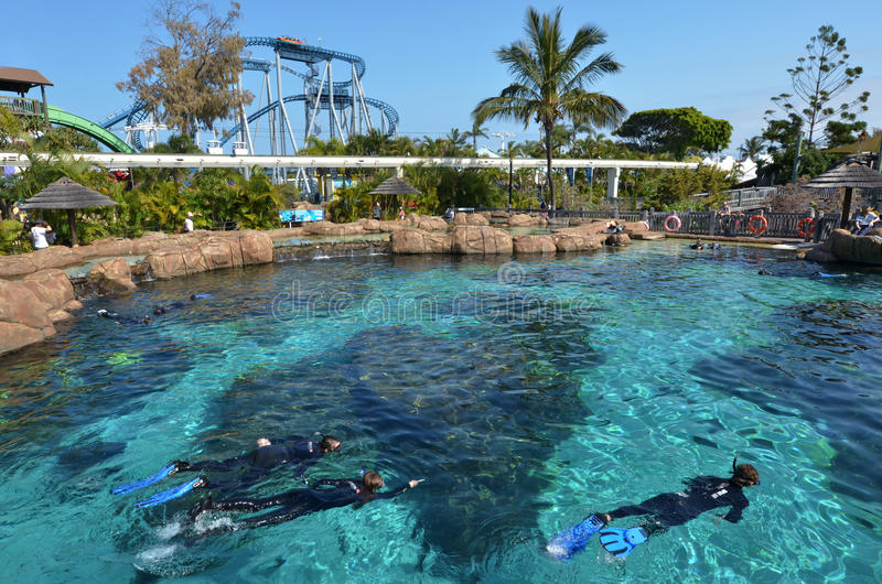 Shark Bay in Sea World Gold Coast Queensland Australia. GOLD COAST, AUS - NOV 06 2014:Visitors dive with sharks in Shark Bay touch pool at Sea World Gold Coast royalty free stock images