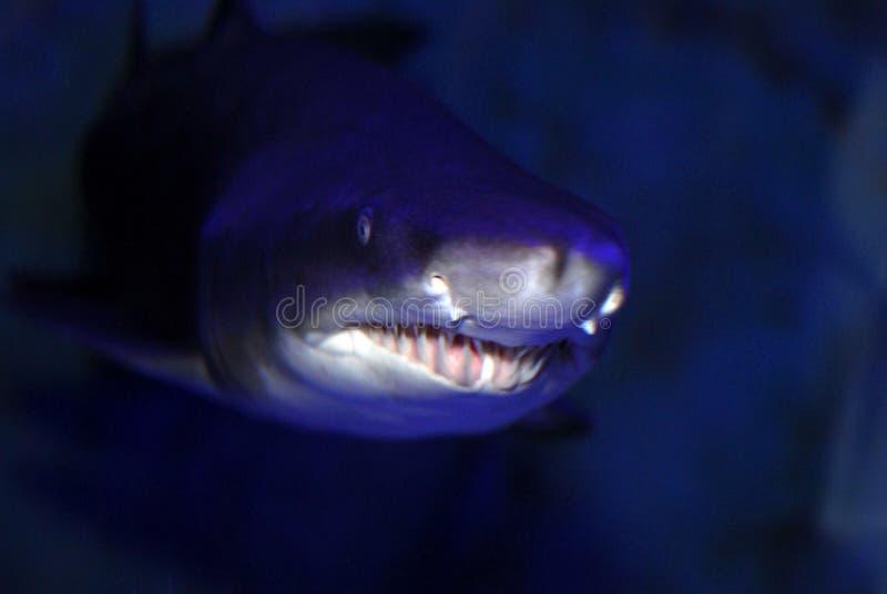 Shark close up stock image