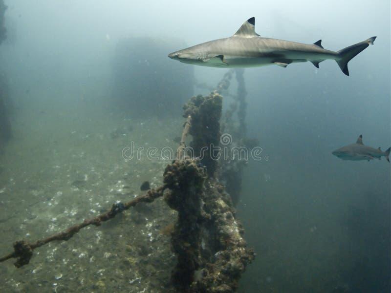 Shark Deck royalty free stock image
