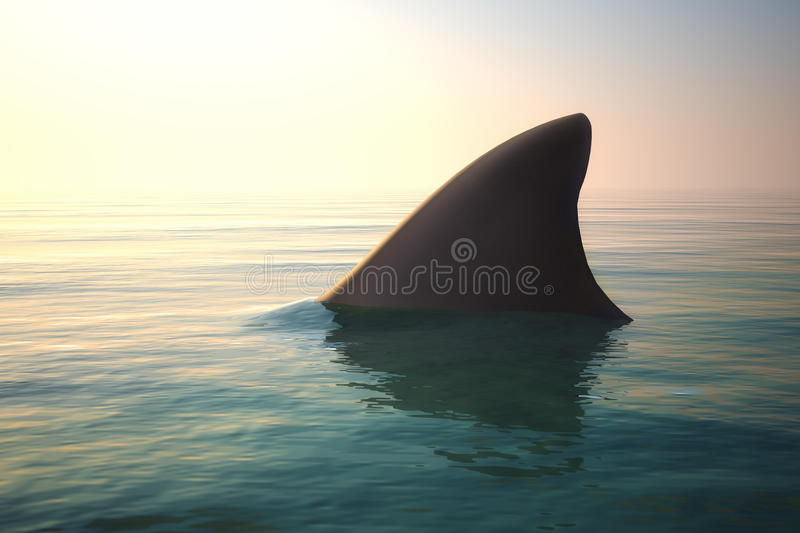 Shark fin above ocean water royalty free stock photography